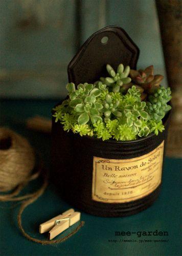 多肉植物の寄せ植え Succulent plants