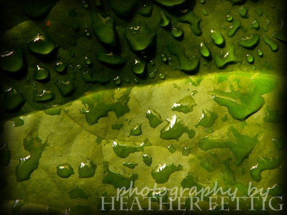 After the Rain 8 x 10 giclee print by TwoBlueRavens on Etsy, $18.00