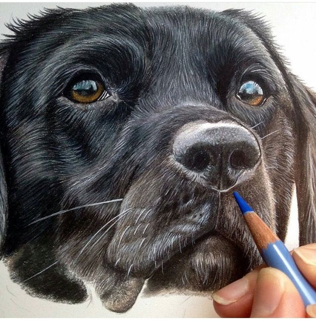 Awesome Realistic Dog Drawing Canine Drawing Dog Drawing