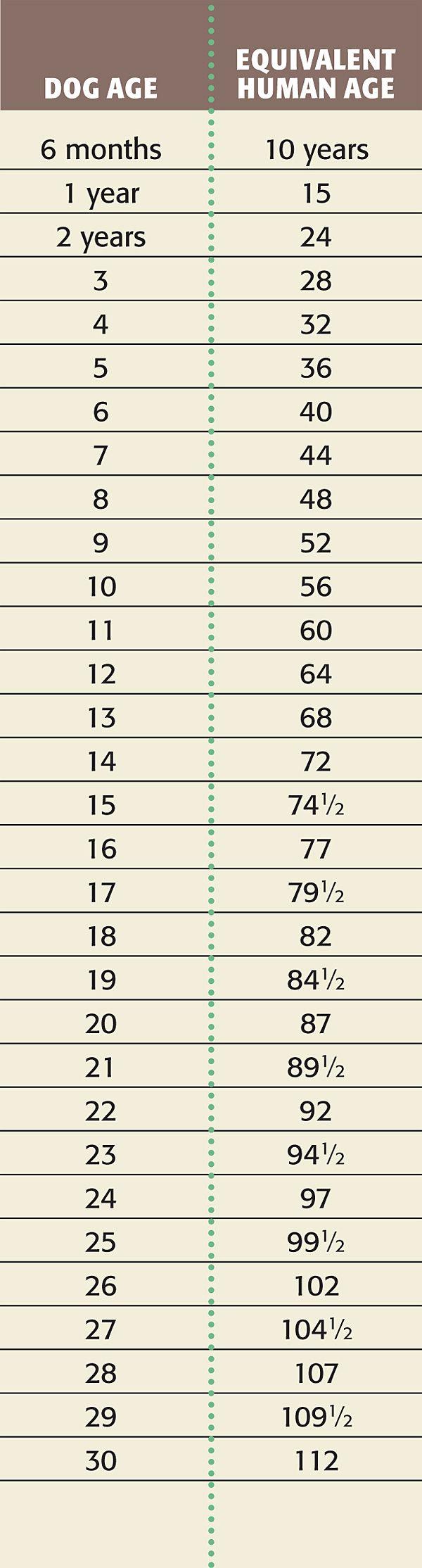 Dog Age Chart: Dog Years to Human Years | Age calculator, Dog ...