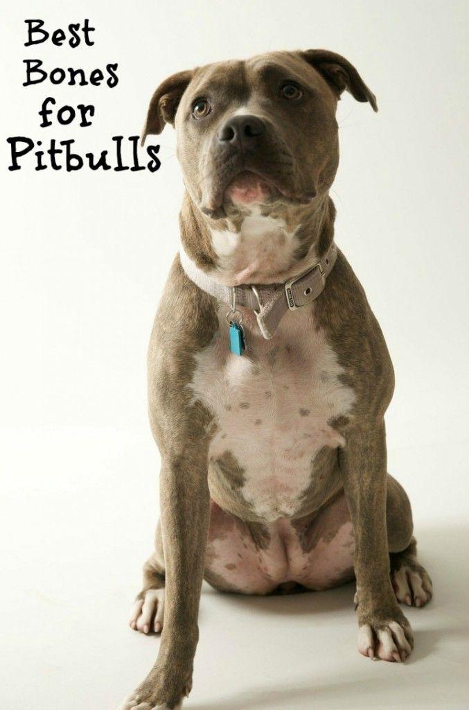 Best Dog Bones For Pit Bulls Puppy Training Tips Puppies Pitbulls