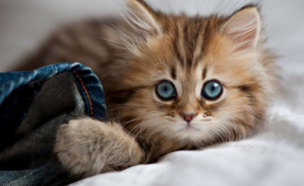 Фотографии самого милого котенка в мире | 732x1200