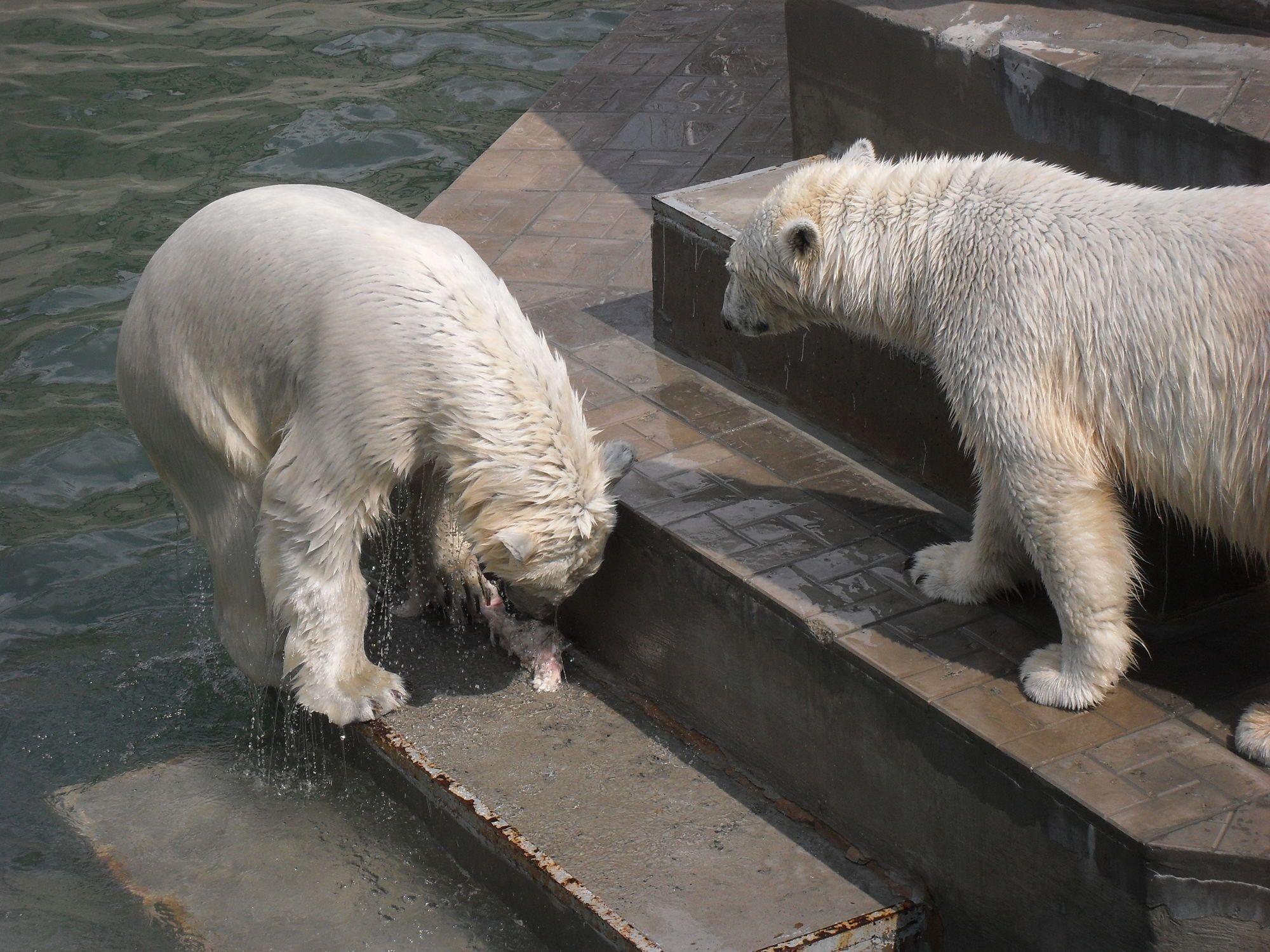 Новосибирский зоопарк. г. Новосибирск