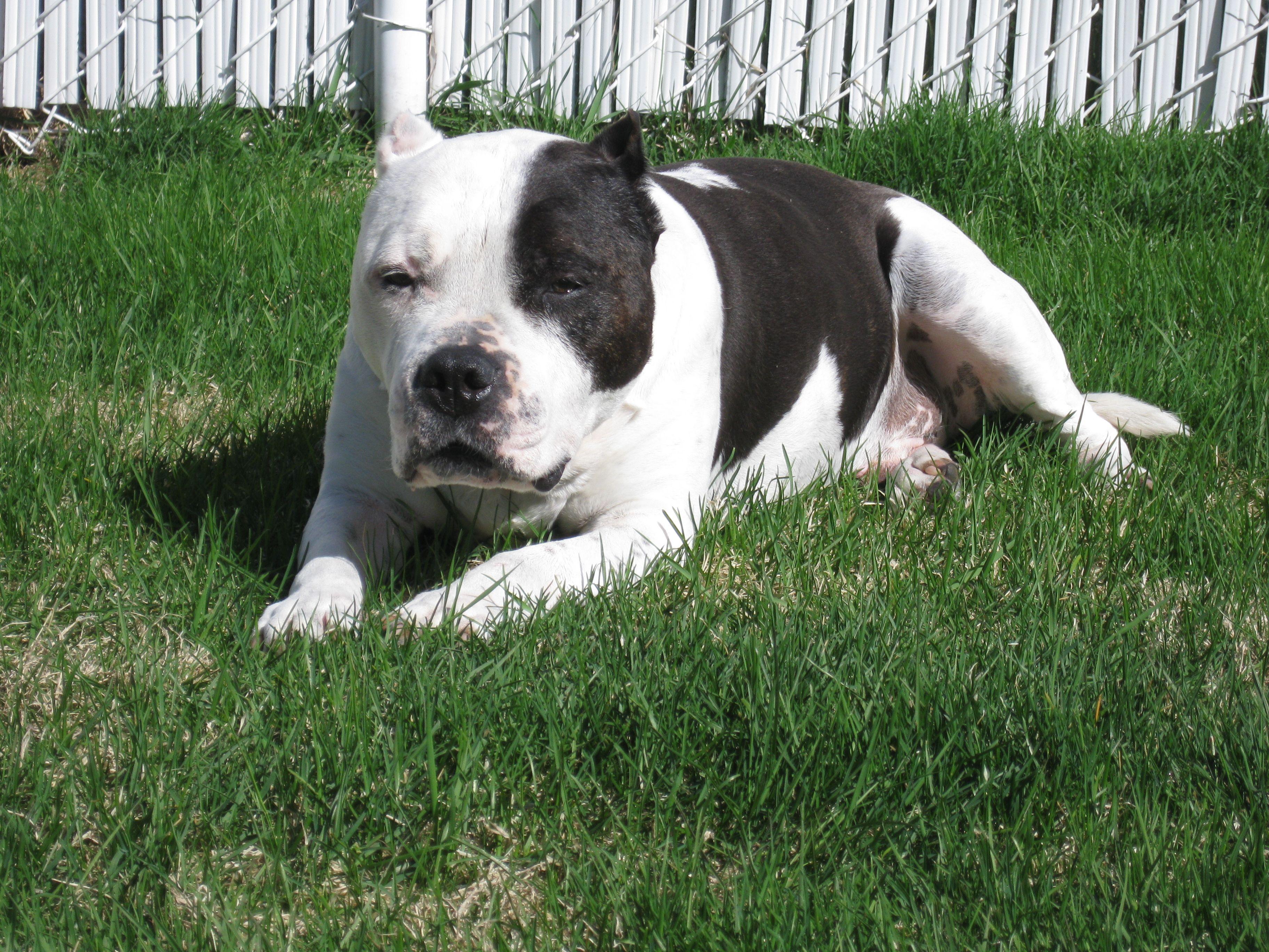 Mon chien Norris (14 ans)......mon compagnon....
