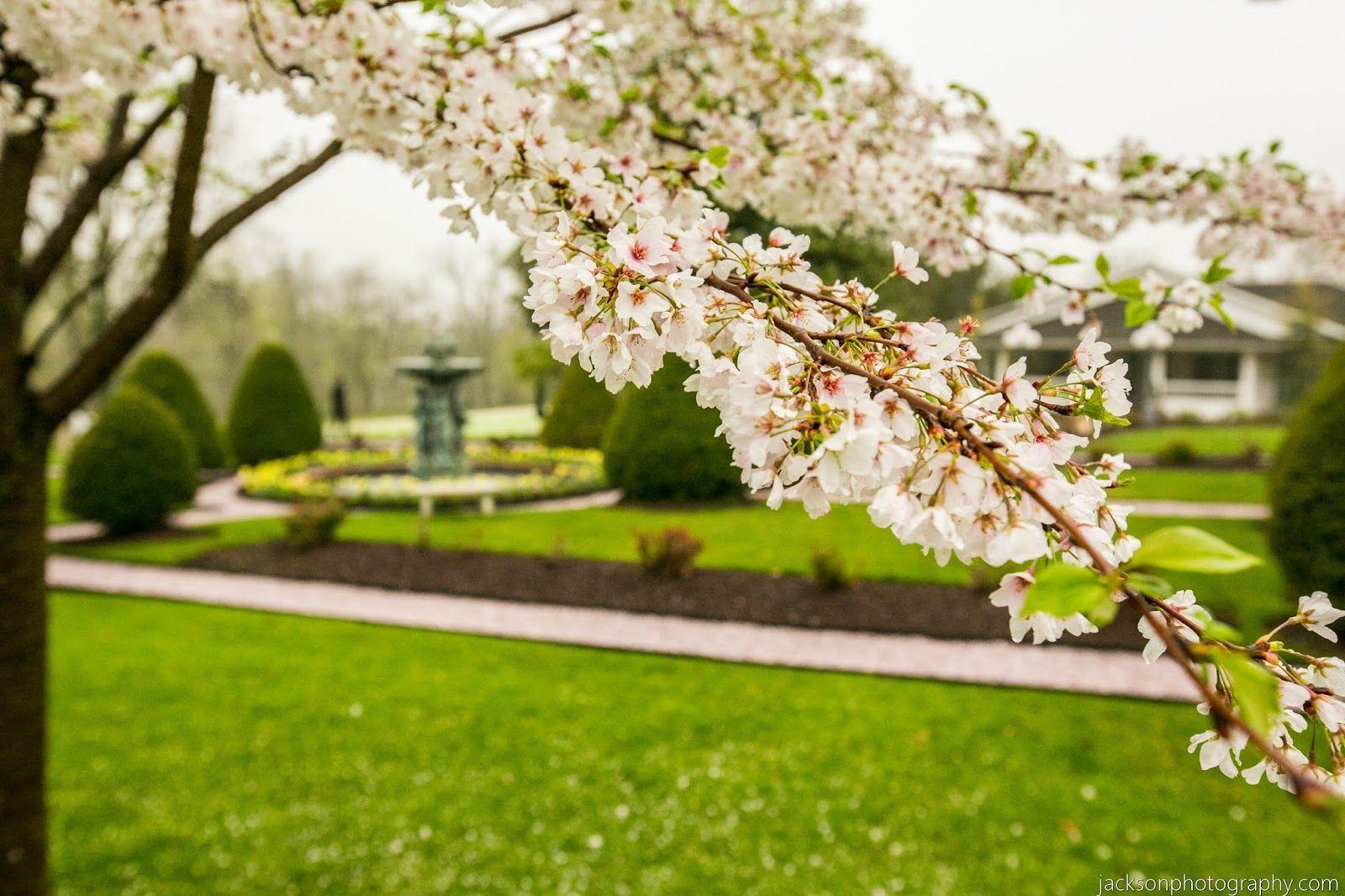 Antrim 1844 Country House Hotel: Intimate Spring Wedding - Liu & Ren