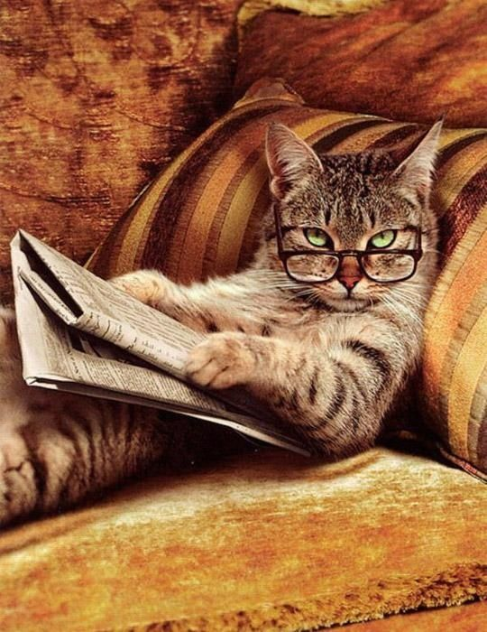hahahaha - this is me! Cat with glasses on couch reading the paper! ;)