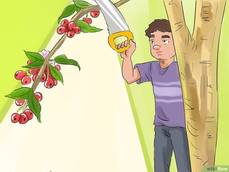 How To Prune A Crabapple Tree 12 Steps With Pictures Crabapple Tree Crab Apple Pruning Apple Trees