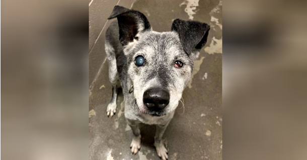 19 Year Old Shelter Dog Still Loves To Play Fetch And Yearns For A Forever Home Shelter Dogs Dog Crying Pet Store