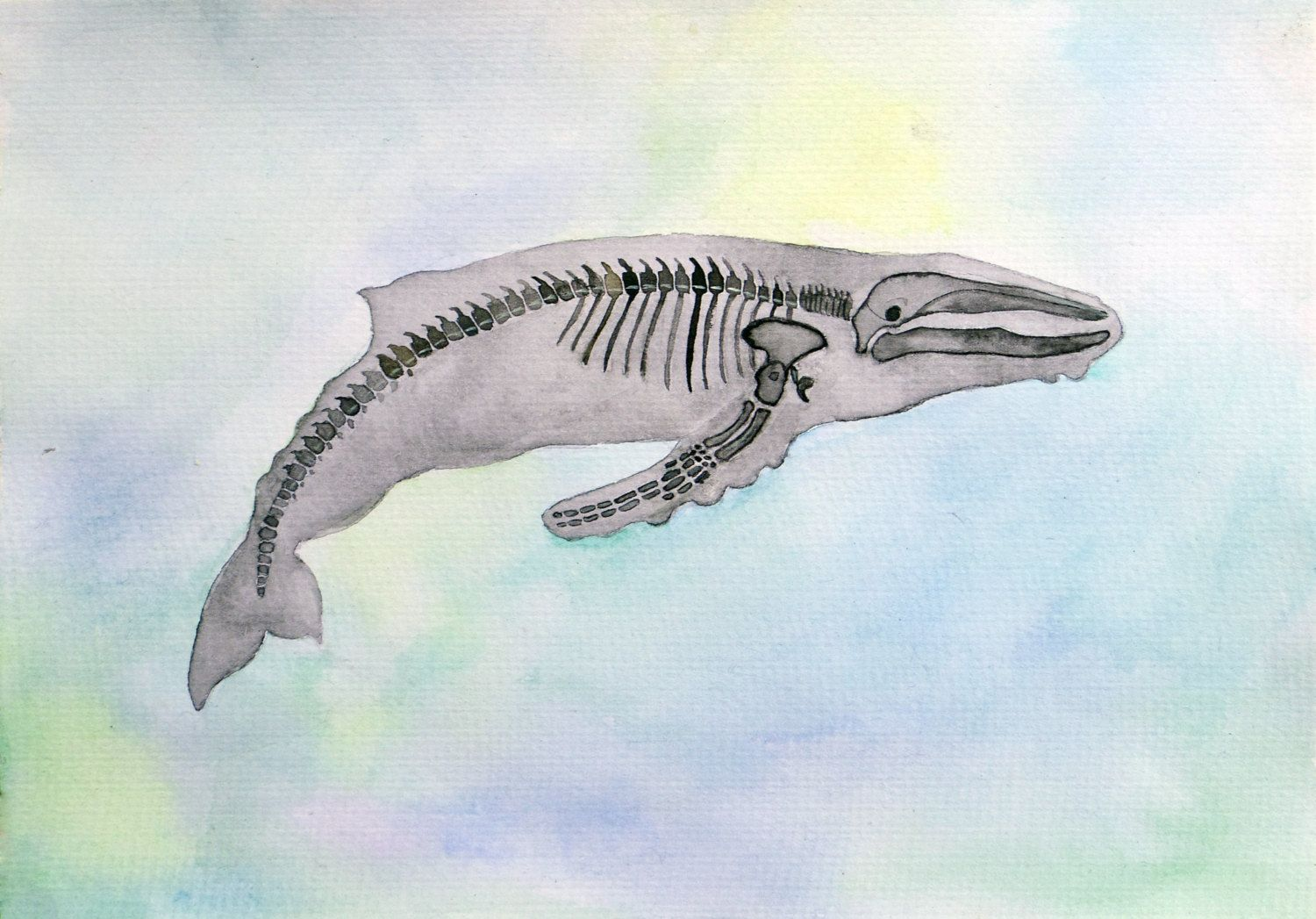 Whale Watercolor Painting Whale Skeleton Anatomy Animal Art Art