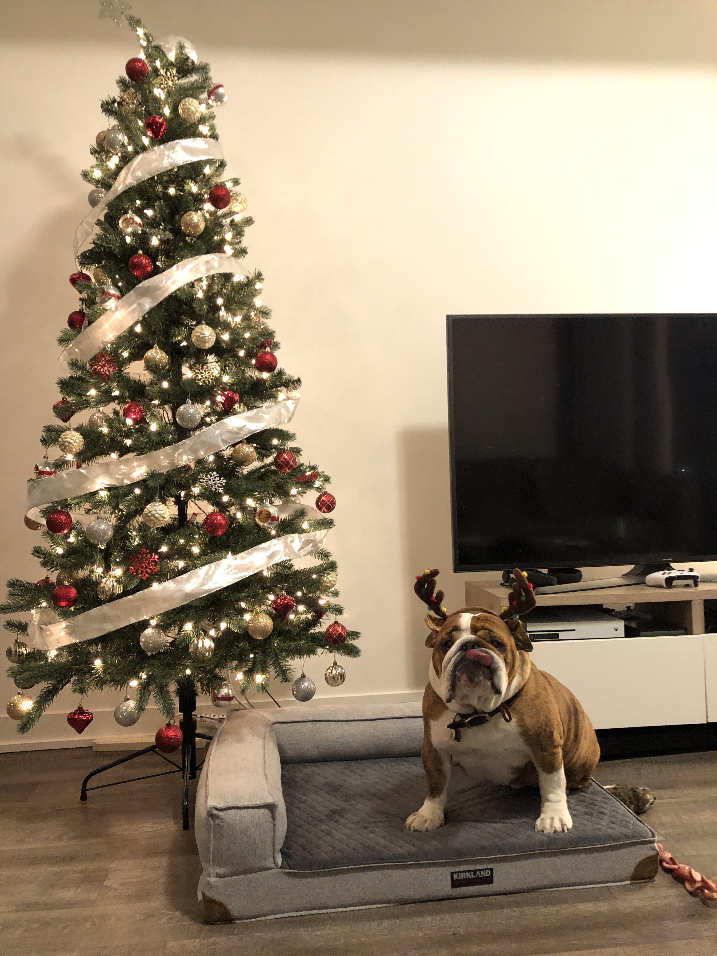 Hanks not feeling the holiday cheer