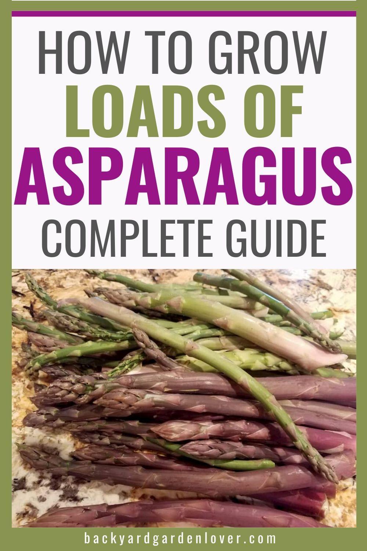 How To Grow Asparagus Secrets To A Healthy Asparagus