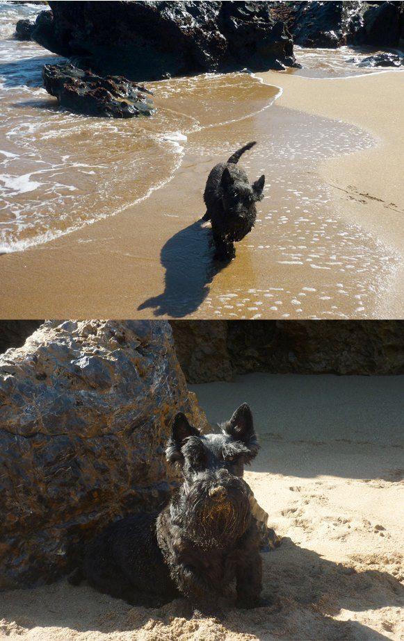 Tango disfrutando de los últimos días de playa, anda que se puso guapo...   #Asturias #Asturiasven