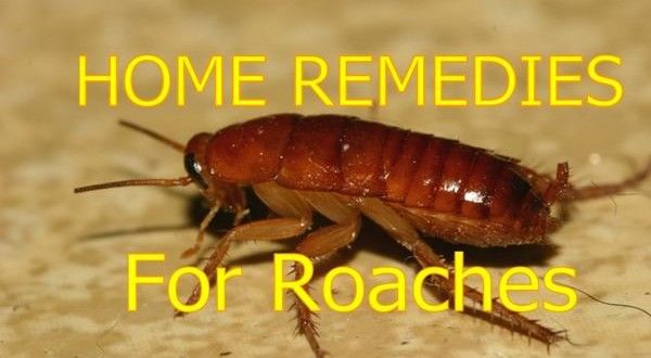 Home Remedies For Cockroaches Removal Home Remedies For Cockroaches Home Remedies For Roaches Home Remedies