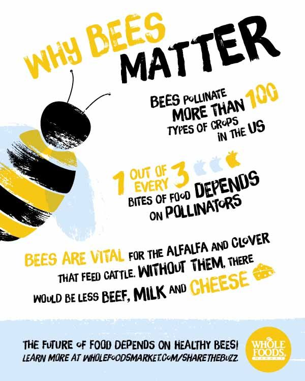 the importance of bees answer key