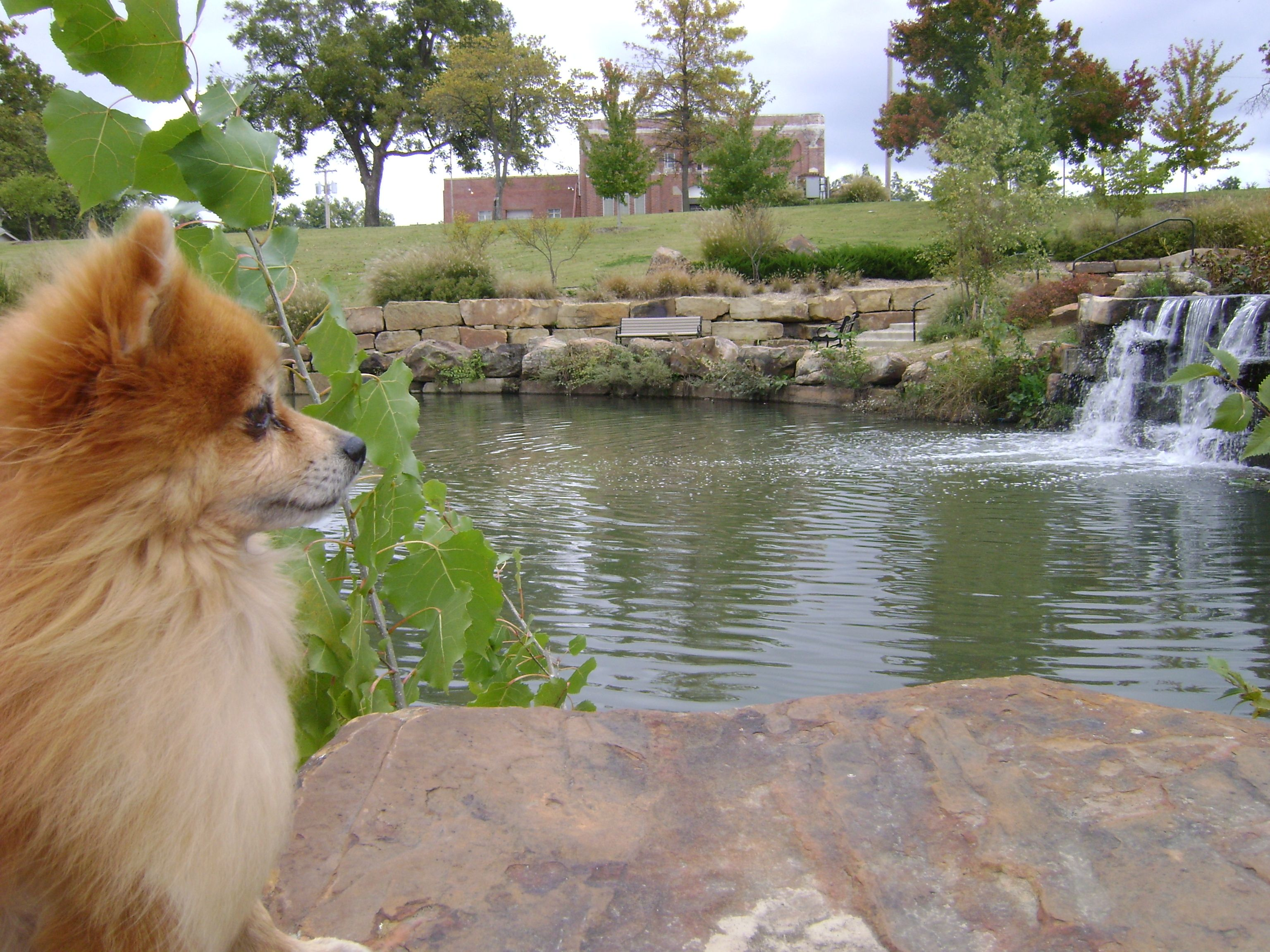 This Pomeranian Is My Running Buddy Cafe Latte Taytay Pomeranian Running Buddies Dog Love