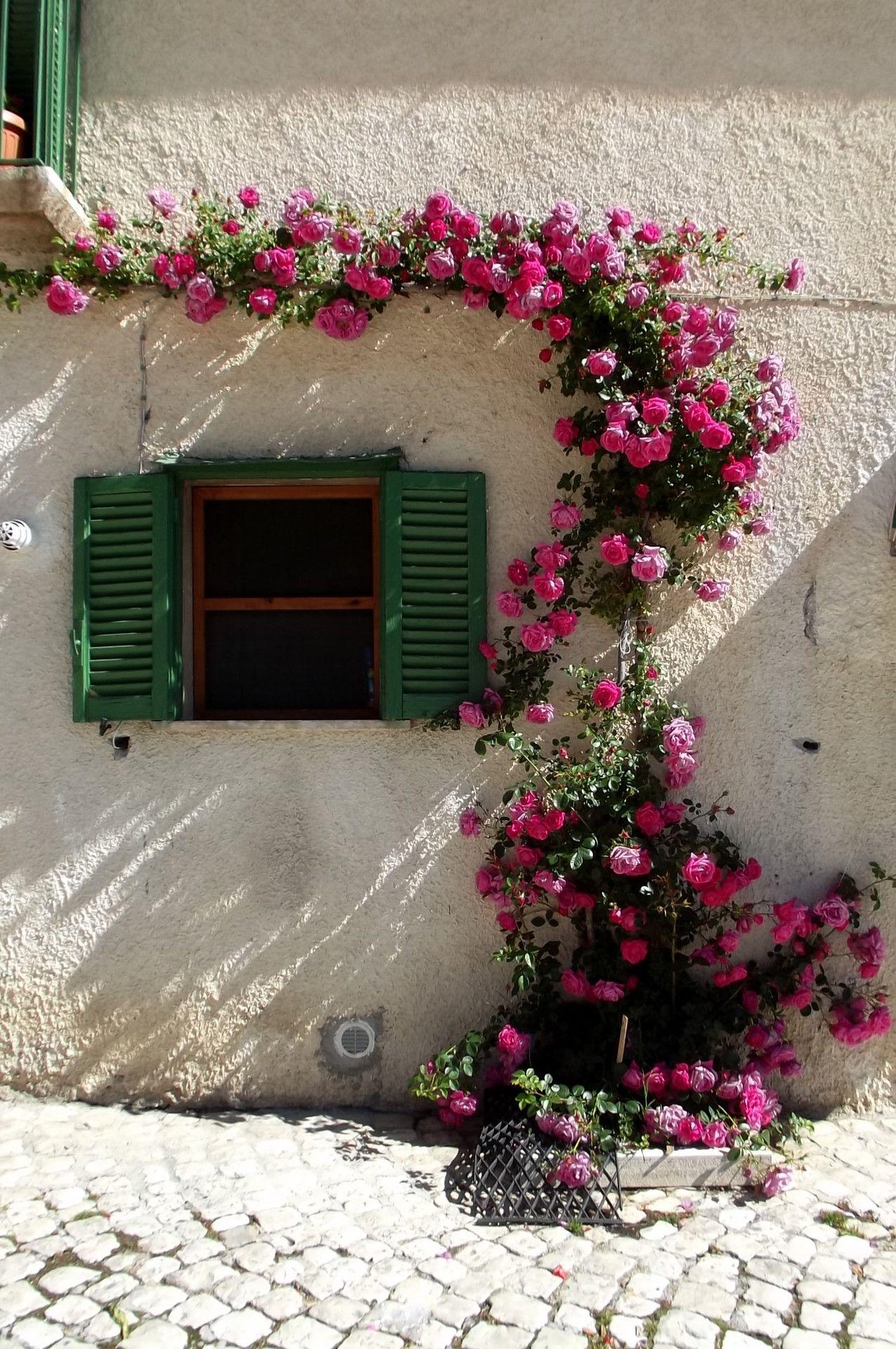 Wonderful climbing flowers against white exterior small window bahe wonderful climbing flowers mightylinksfo