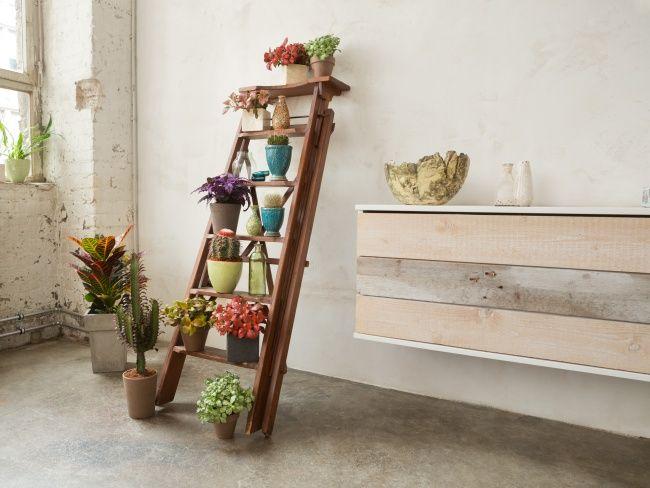 Eine bunte Pflanzenmischung macht sich auf einer Leiter besonders gut - Pflanzenfreude.de