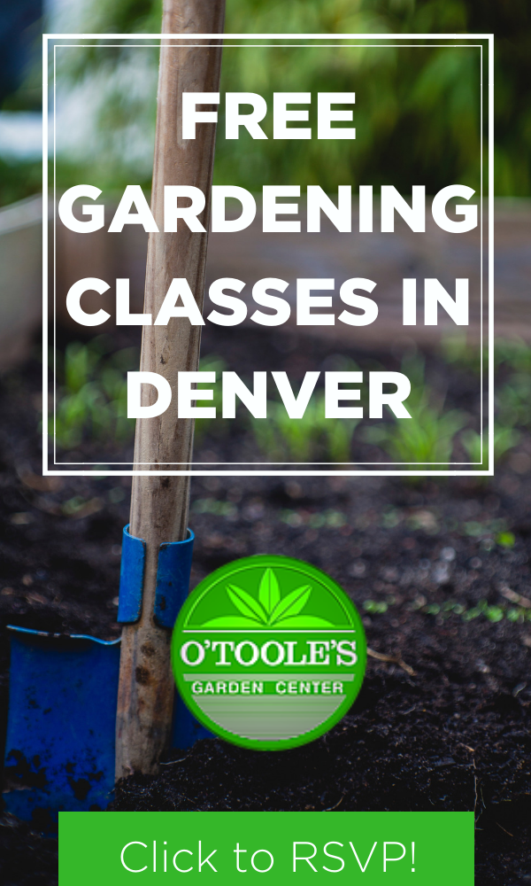 O Toole S Gardening Centers Is Offering Free Gardening Classes In