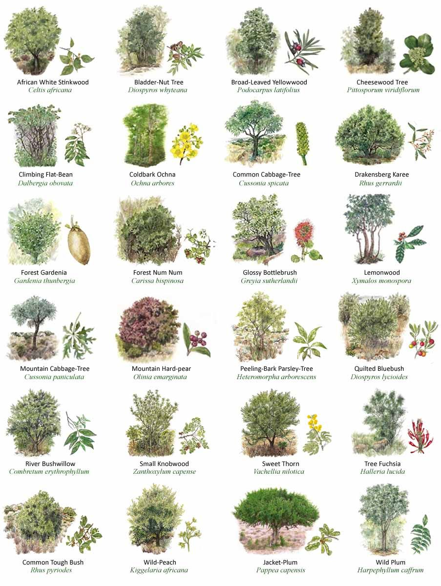 Pin by Antonis Fylladitis on Elements Of Nature in 2019 ...