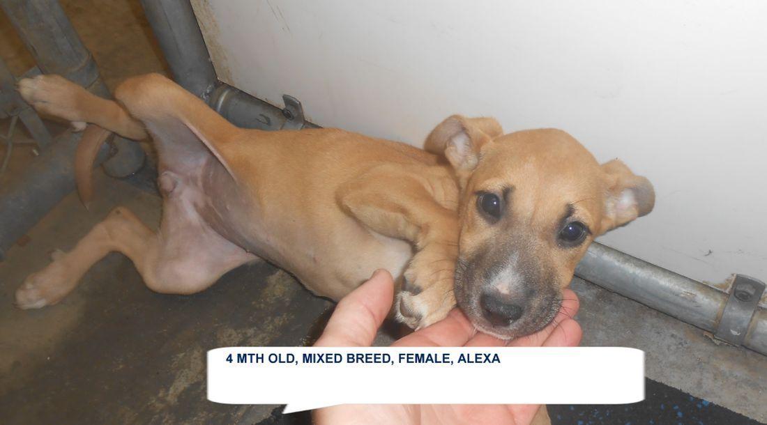 Alexa Has Few Days Left To Live Animals Dog Adoption Irish Setter Mix