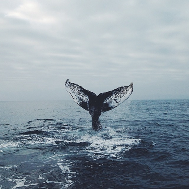 When's the last time you saw a whale in person??? Look like a fun adventure to us!  Make sure wear Polarmax Base Layers on your next adventure polarmax.com
