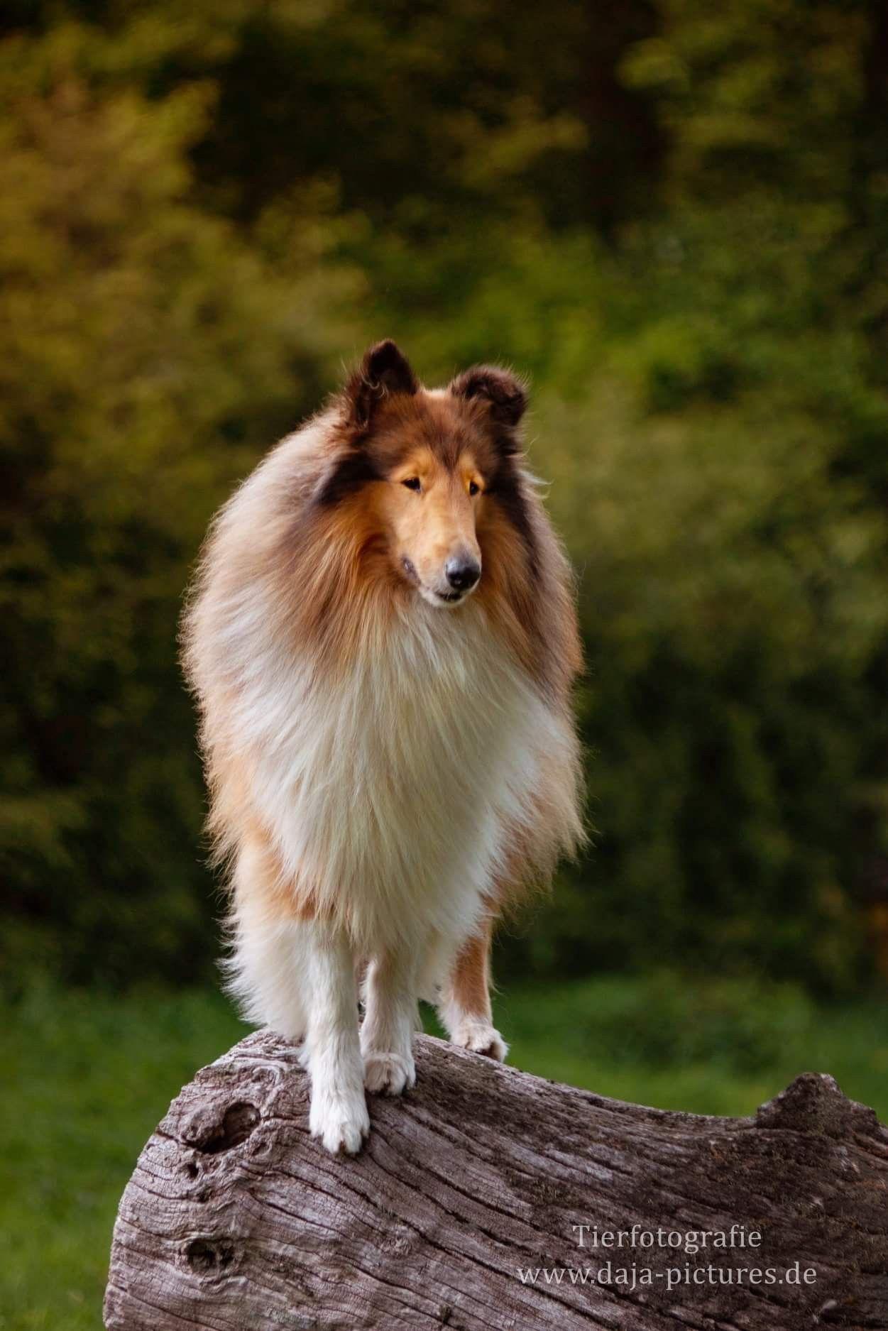 Pin On Hundefotografie