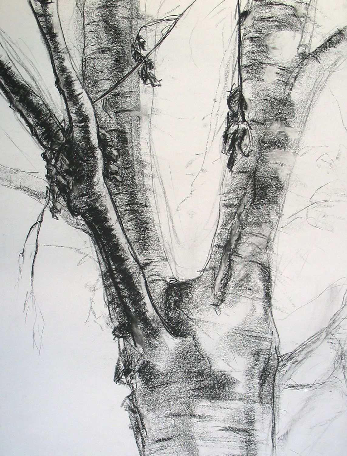 Tree Charcoal Drawing Trees 1 Charcoal Landscape Landscape Drawings Tree Drawing Charcoal Drawing