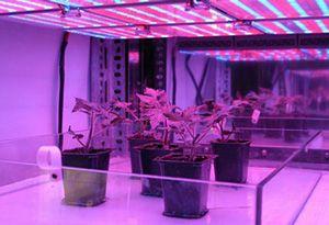 Indoor lighting for gardens gardens pinterest grow room indoor lighting for gardens workwithnaturefo