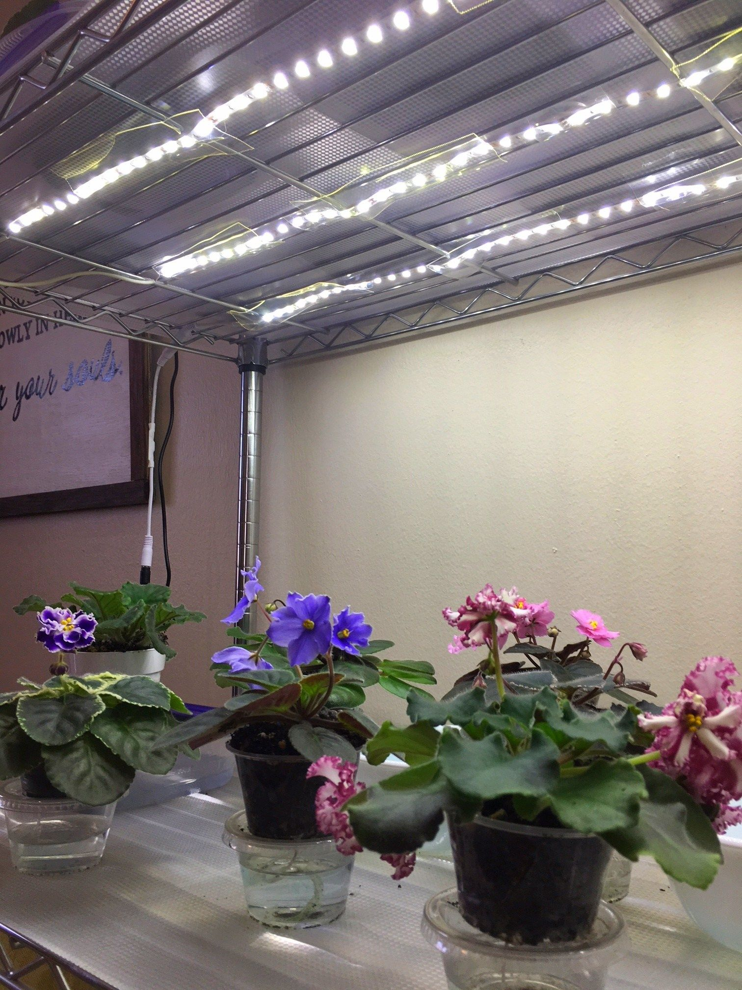 How To Grow Plants With Led Lights Diy Plant Stand 400 x 300