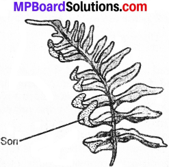 Photo of MP Board Class 7th Science Solutions Chapter 12 Reproduction in Plants img 16