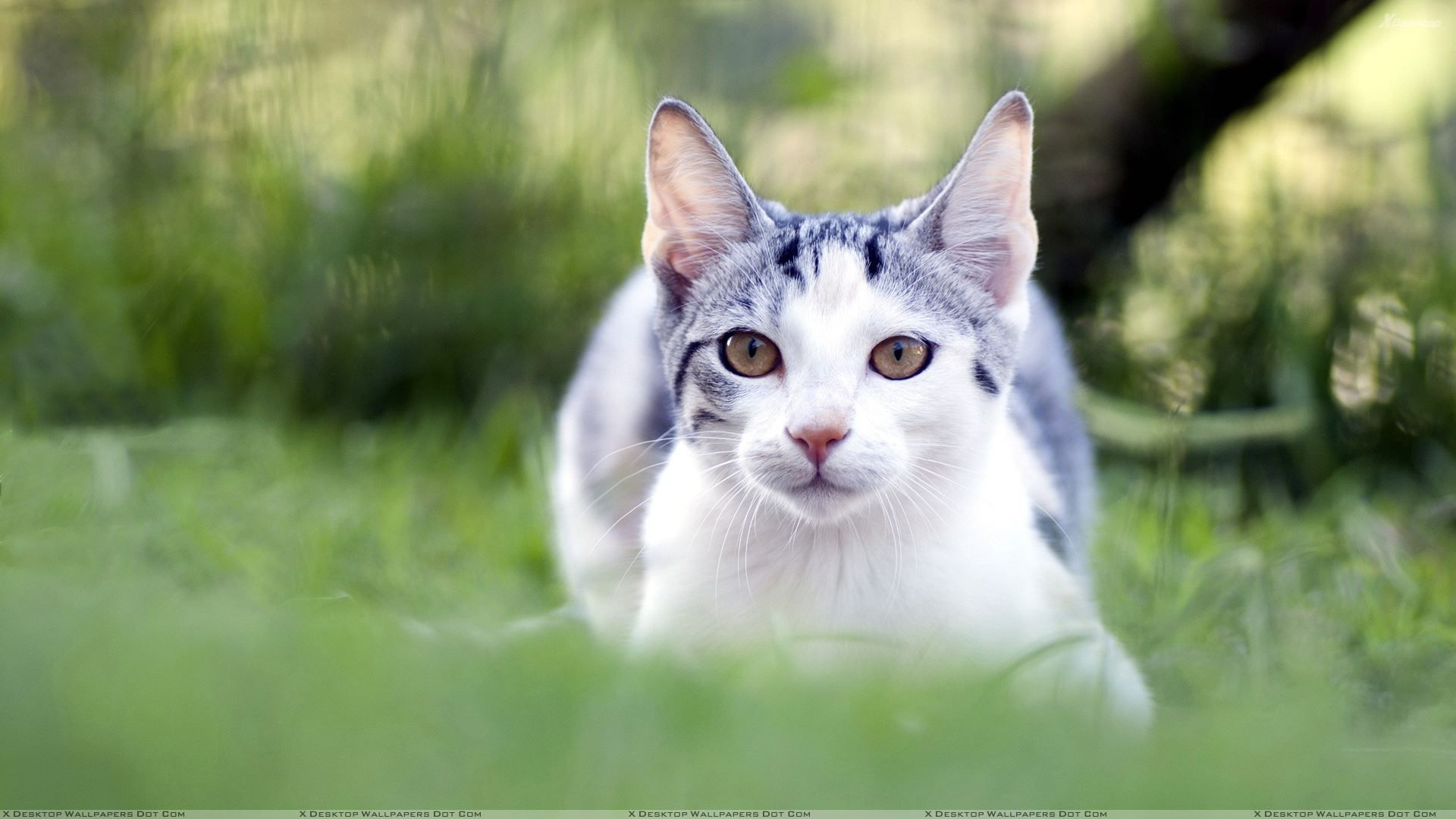 Wallpapers For Gt Cute White Cat Wallpaper