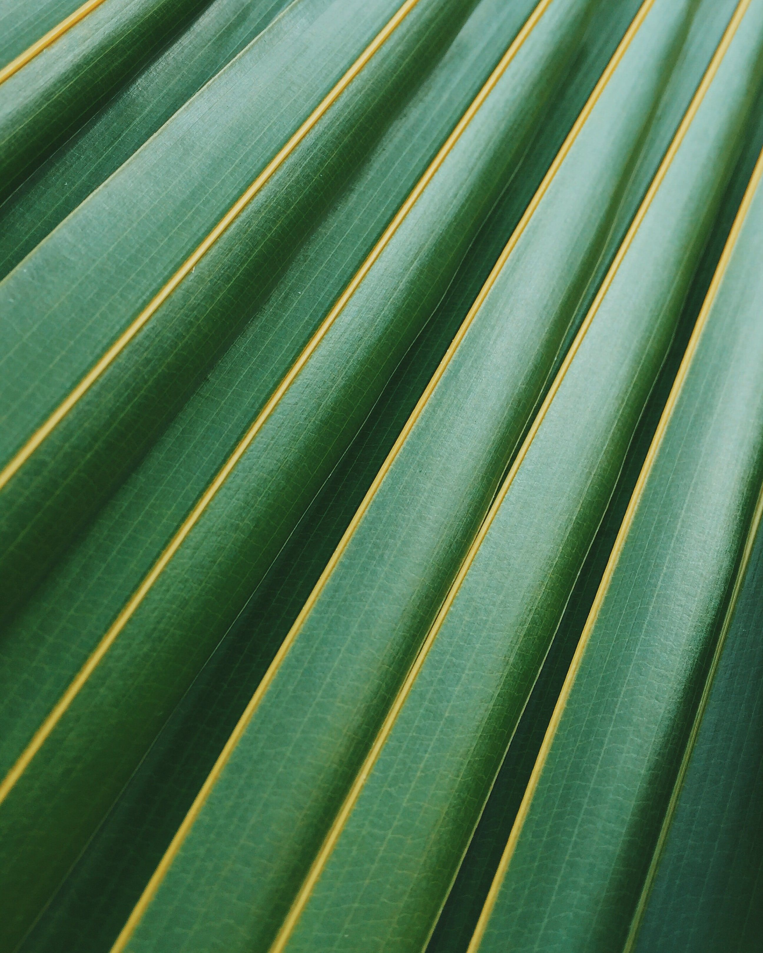 20 Palm Tree Pictures
