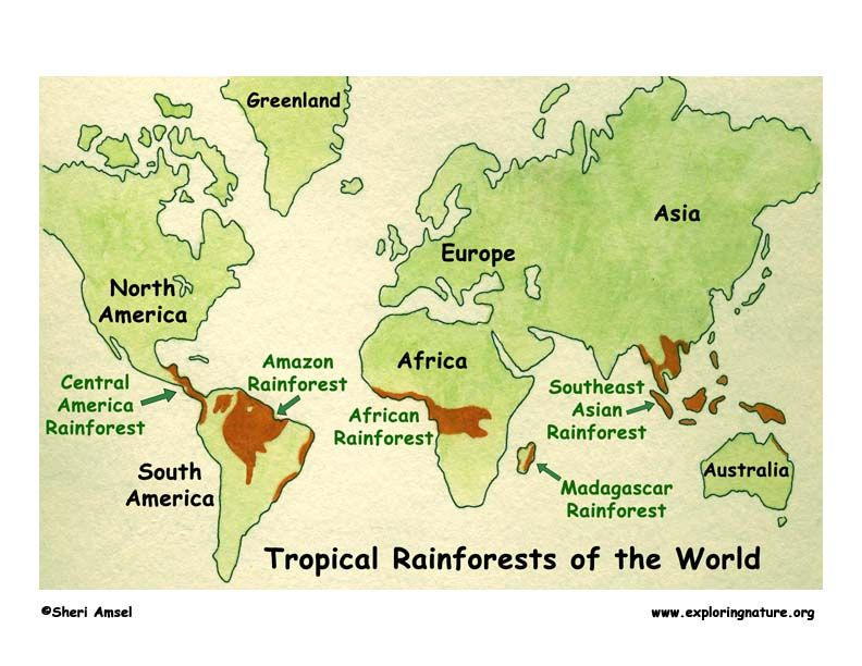 Rainforests of the world index exploring nature educational rainforests of the world index exploring nature educational resource gumiabroncs Choice Image