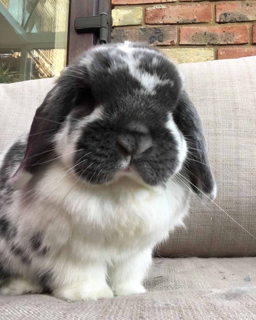 Pinterest Ijackson666 Pet Bunny Cute Bunny Pictures Cute Baby Bunnies