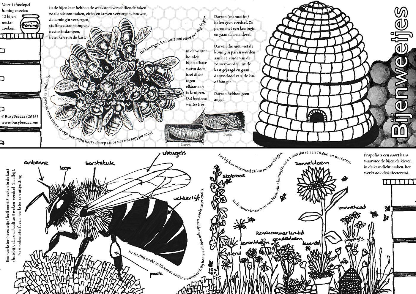 Busybeezzz Bijen Kleurplaten Natuur