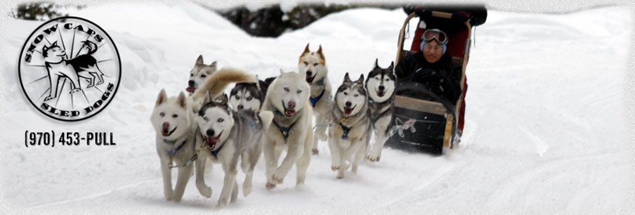 Breckenridge Colorado Best Summer Activities - Snow Caps Sled Dogs - Things to Do in Breckenridge