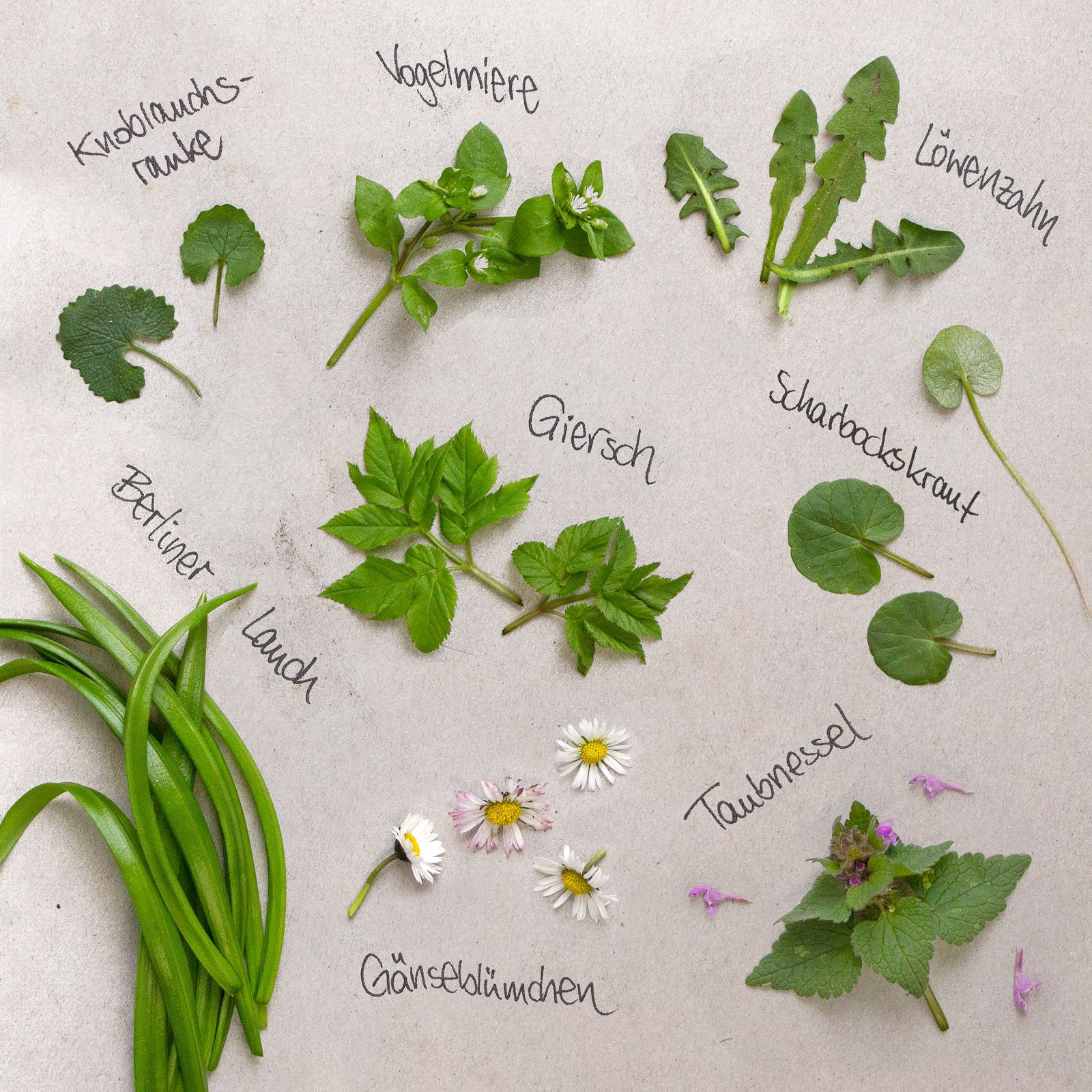 Pin Auf Essbare Wildpflanzen Bestimmen Sammeln Und Verarbeiten
