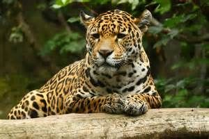fotos en hd de animales de la selva - de búsqueda