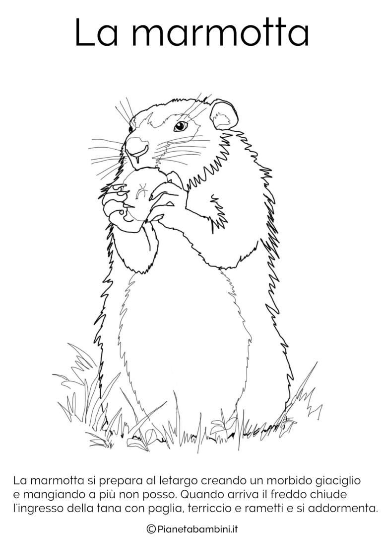 Disegni Di Animali Che Vanno In Letargo Da Colorare Marmotte