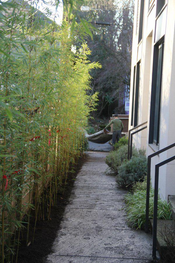 tolle bambus tipps viel grün für die schmalen durchgänge | garten, Garten und erstellen