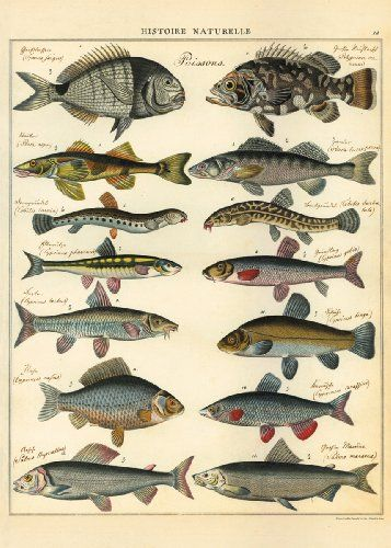 Cavallini & Co. Natural History Fish Decorative Decoupage Poster Wrapping Paper Sheet Cavallini & Co. http://www.amazon.com/dp/1574892436/ref=cm_sw_r_pi_dp_uq91tb13J9KZ8HSP