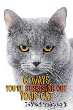 "6 Ways You're Stressing Out Your Cat | eBay ❤❦♪♫Thanks, Pinterest Pinners, for stopping by, viewing, re-pinning, & following my boards. Have a beautiful day! ^..^ and ""Feel free to share on Pinterest ♡♥♡♥ #catsandme ❤❦♪♫!♥✿´¯`*•.¸¸✿♥✿´♥✿´¯`*•.¸¸✿♥✿´¯`*•.¸¸✿♥✿"