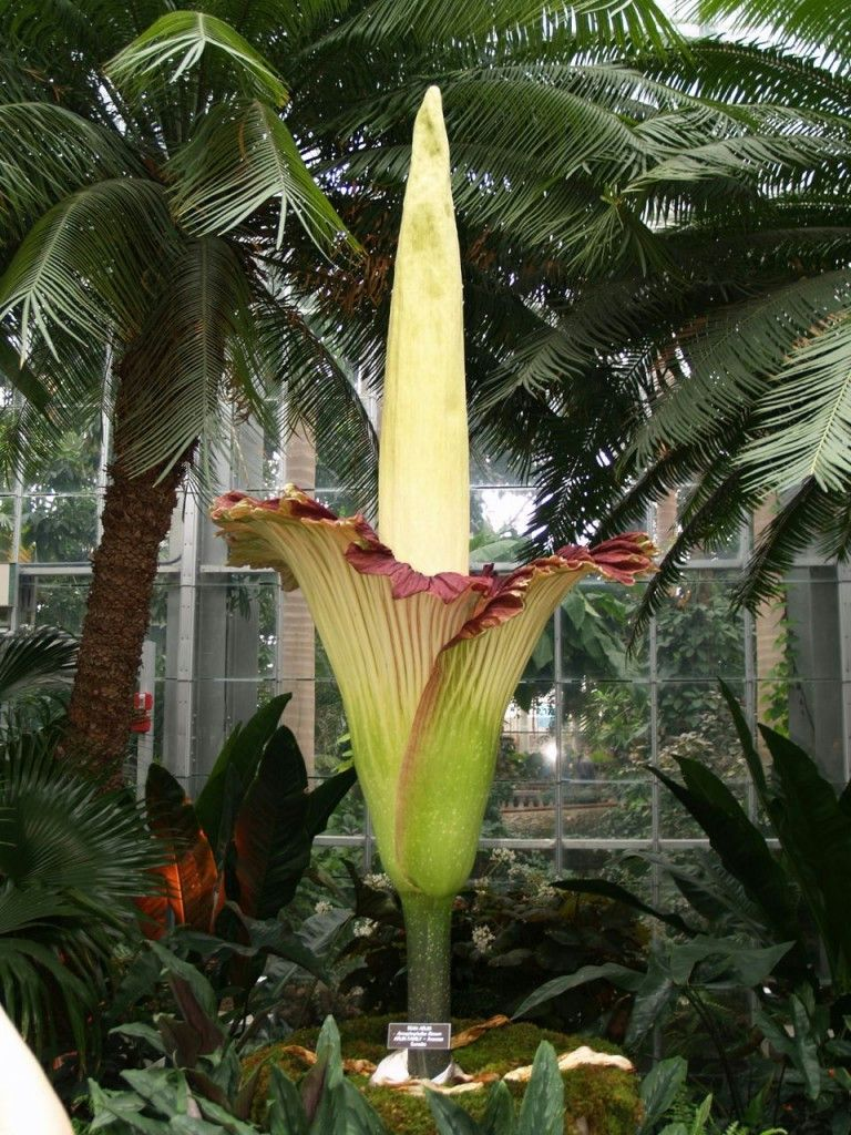 Really Weird Plants Corpse Flower Rare Flowers Weird Plants