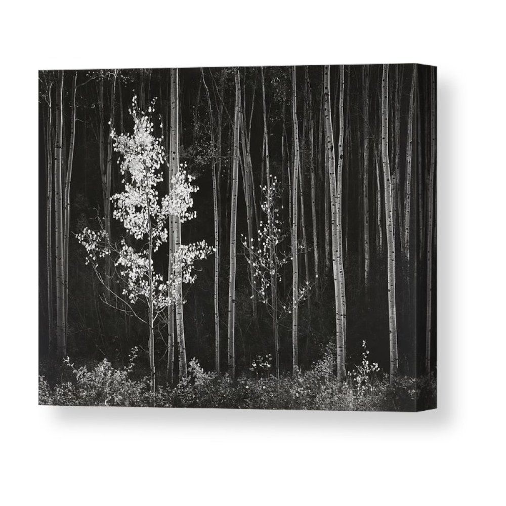 Aspens Northern New Mexico Canvas Print Canvas Art By Ansel Adams In 2020 Ansel Adams Black And White Landscape Ansel Adams Photography