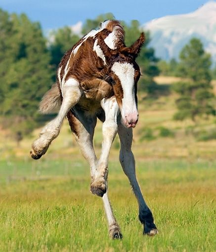 Foals are the cutest, and the most rambunctious, things in ...
