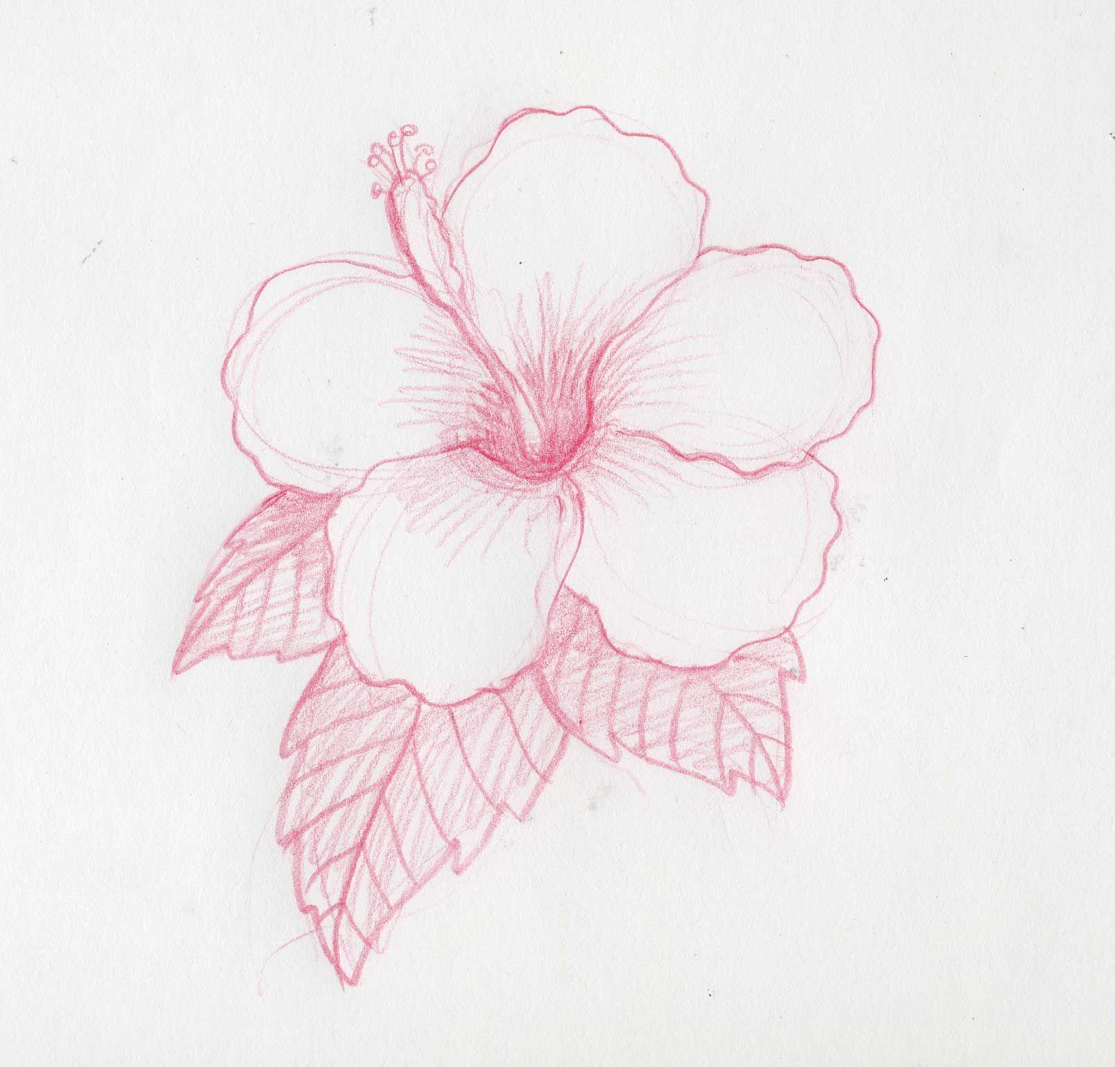 Cómo Dibujar Flores Hawaianas Manualidades Pinterest Drawings