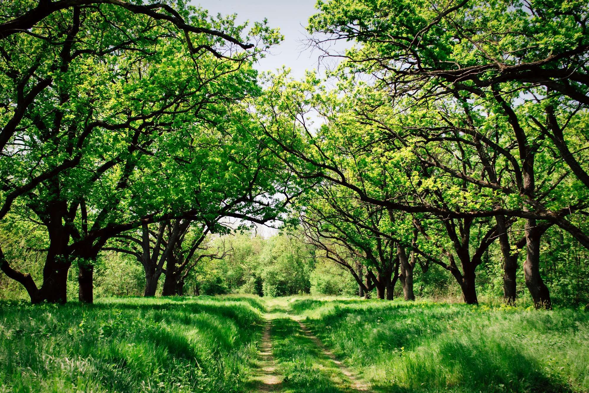 Country Countryside Field Forest Hdr Landscape Meadow Nature Outdoors Path Rural Spring Summer Tree Spring Wallpaper Landscape Spring Photography