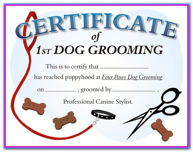 dog grooming certification texas - a career opportunity as a ...