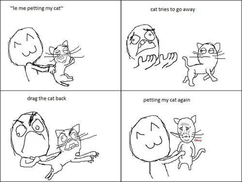 42e5762a90d135ce4acb6df862f92b57 funny cat petting rage comic cats everything cats pinterest