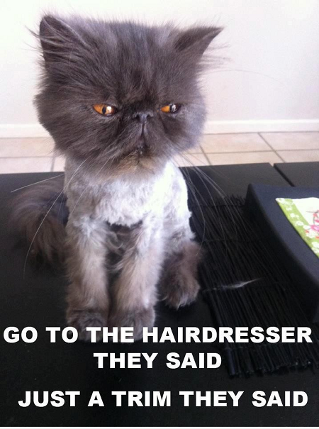 Persian Cat Meme Doll